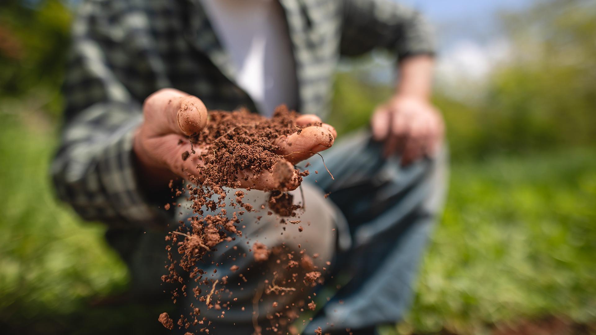 Terre-net – «Un sol vivant peut stocker jusqu'à 500kg de carbone par hectare et par an»