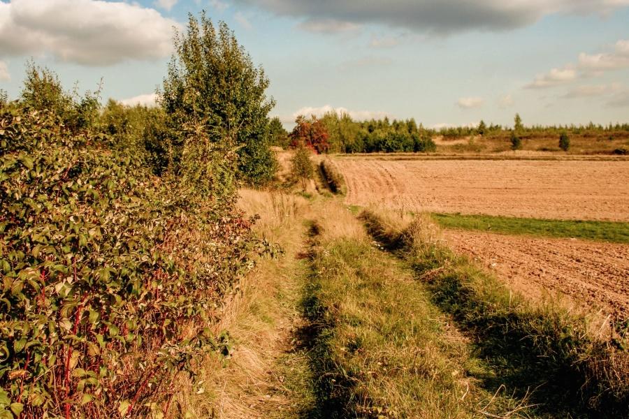 « Sols vivants », l'initiative qui révolutionne le modèle agricole