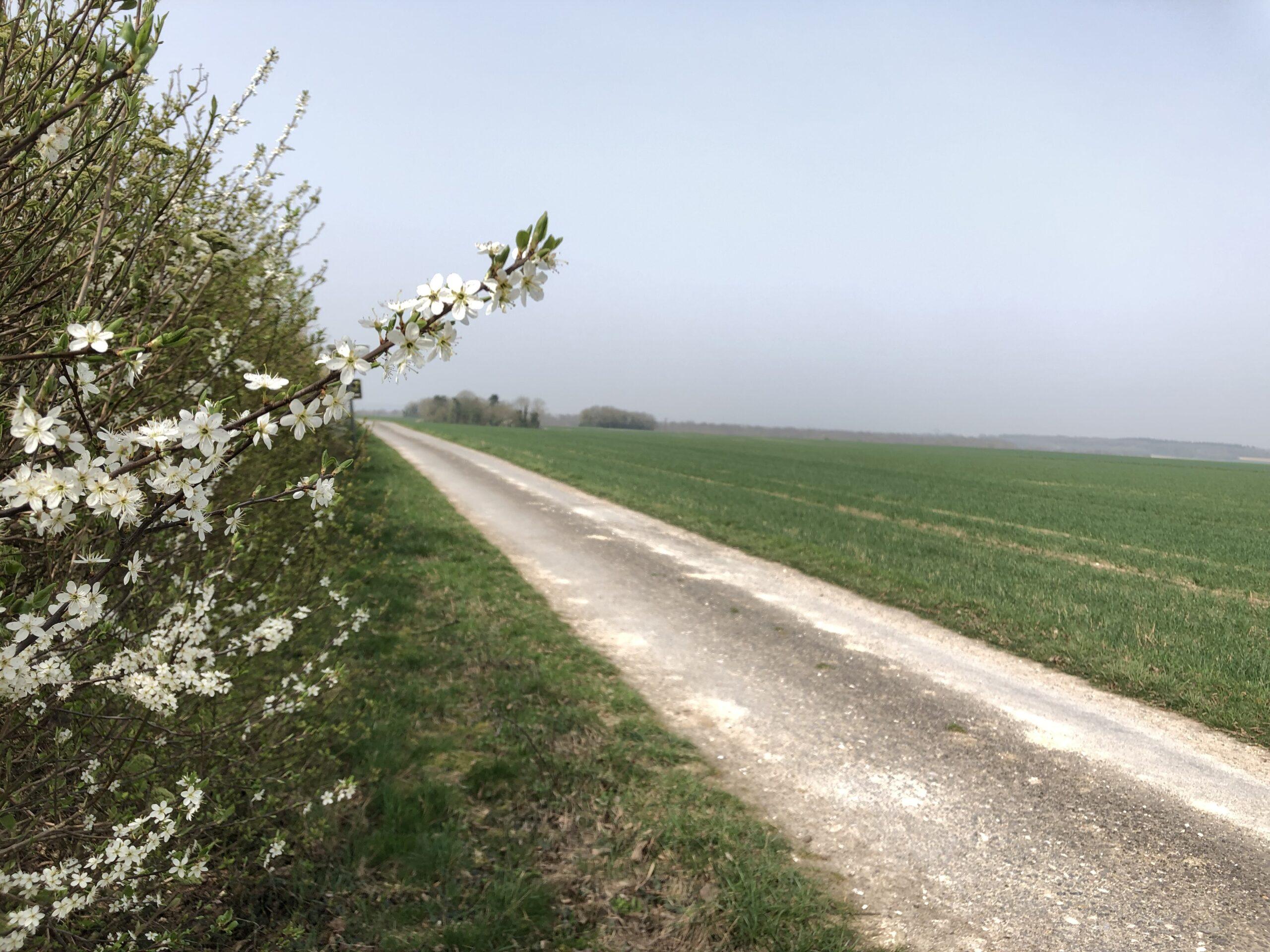 Dans les Hauts-de-France l'agriculture régénératrice se déploie de manière collective